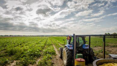 تراکتور در زمین کشاورزی