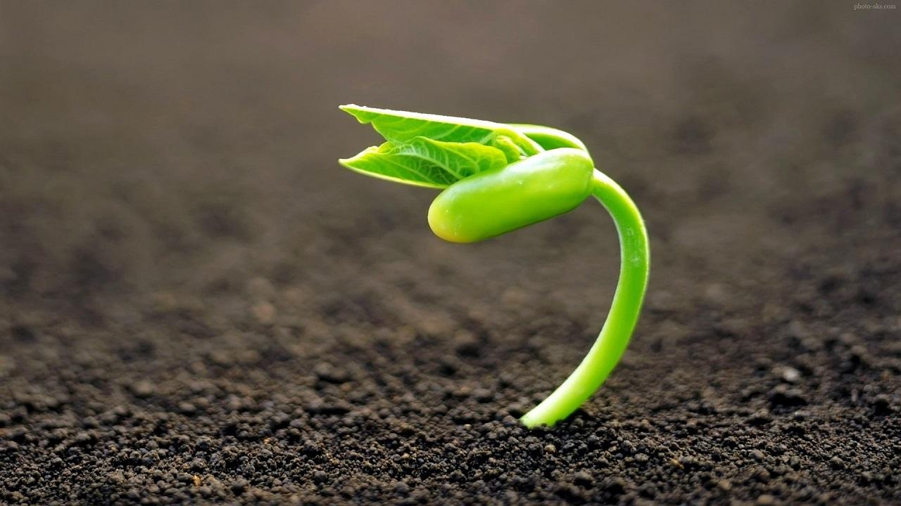 نخستین رویداد روناک با محوریت کشاورزی