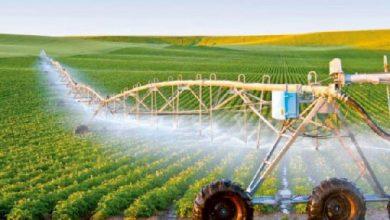 بستر فعالیت شرکت های دانش بنیان حوزه کشاورزی در قاره آفریقا فراهم شد