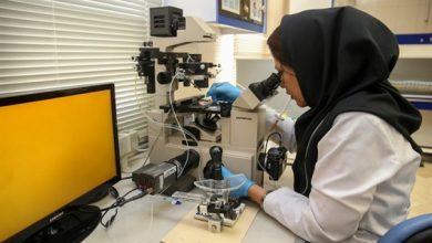 آمادگی صندوق نوآوری برای حمایت از پژوهشهای علومانسانی