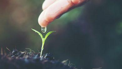 آشنایی با 8 استارتاپ حوزه تکنولوژی آب که به رشد صنعت کشاورزی کمک میکنند