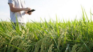 استارتاپ ها به حوزهی کشاورزی ورود کنند.
