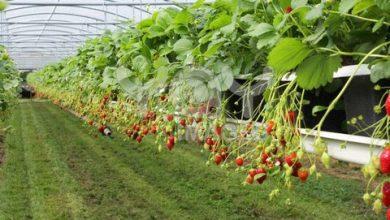 معرفی ۴۲ شرکت دانش بنیان بخش کشاورزی برای دریافت تسهیلات