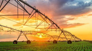 معرفی 5 استارتاپ با ایده هایی جالب در حوزه فناوری مزرعه داری