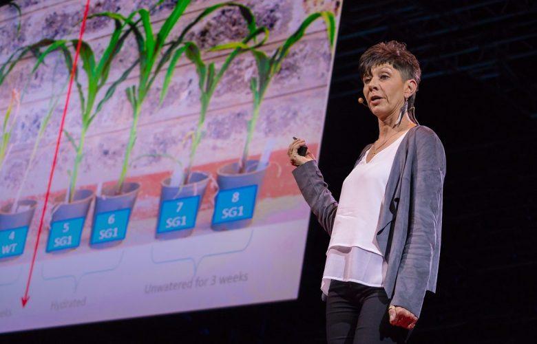 چطور میتوانیم محصولات را بدون آب پرورش دهیم؟