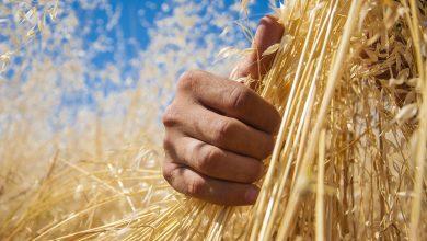 آشنایی با برترین استارتاپ های حوزه کشاورزی در زمینه بهبود فعاليتها و ارتقای سطح علمی کشاورزان