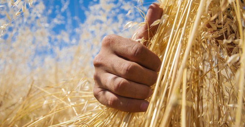 Photo of آشنایی با برترین استارتاپ های حوزه کشاورزی در زمینه بهبود و ارتقای سطح علمی کشاورزان