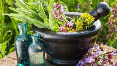 استارت آپ های فعال در گیاهان دارویی حمایت می شوند.