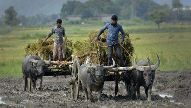 استارتاپ های حوزه کشاورزی در هند