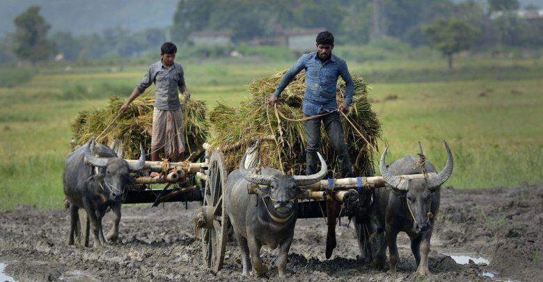 Photo of استارتاپ ها آینده کشاورزی هندوستان را رقم می زنند!