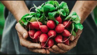 Photo of جنبش غذای محلی چیست؟