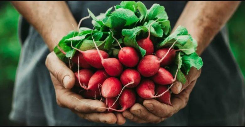 جنبش غذای محلی چیست؟