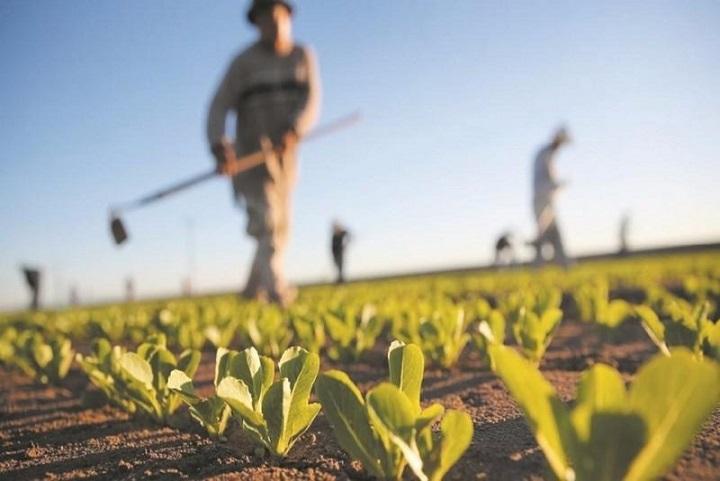 شهر یزد ؛ پایلوت طرح استفاده از استارتاپ های اقتصاد کشاورزی