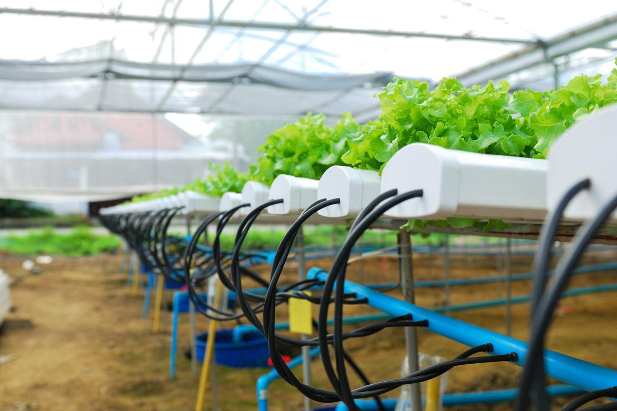 بررسی مزایا و معایب کشاورزی بدون خاک
