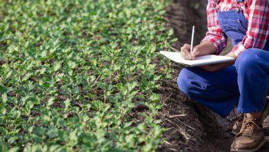 بررسی چالش های کشاورزی قراردادی