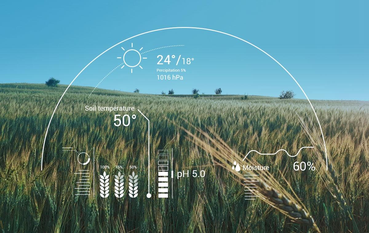 هوش مصنوعی در فرآیندهای سه گانه کاشت، داشت و برداشت محصولات کشاورزی ورود کرده است.