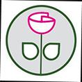معرفی استارتاپ کافه گلدون ، فروشگاه آنلاین گل و گیاه