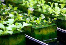 کشاورزی بدون خاک یا هیدروپونیک چیست؟