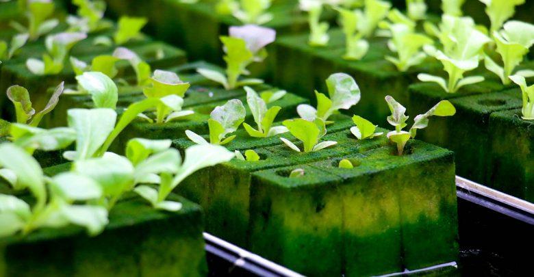Photo of کشاورزی بدون خاک یا هیدروپونیک چیست؟
