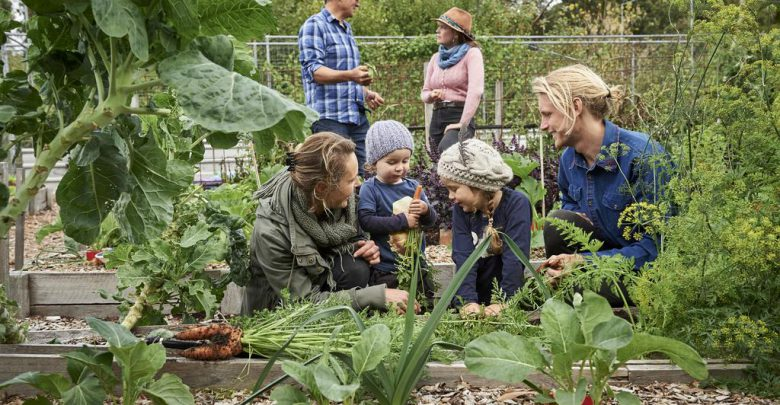 Photo of چگونه مزرعه خود را برای بازدید گردشگران آماده کنیم؟