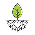 معرفی استارتاپ پلنتیوم ، فروشگاه انواع اکسسوری های تولید شده با تراریوم و گیاهان مینیاتوری