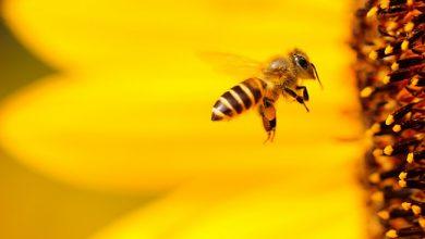 Photo of نخستین نهاد توسعه کسب و کار در رسته زنبورداری افتتاح شد