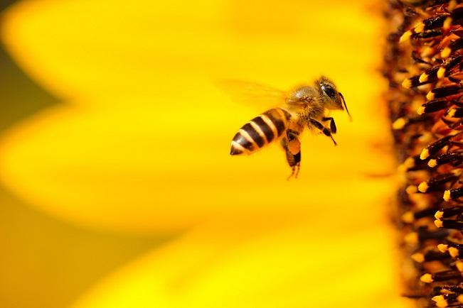 نخستین نهاد توسعه کسب و کار در رسته زنبورداری افتتاح شد