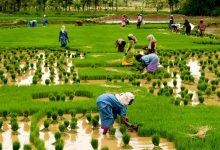 Photo of کارآفرینان جدید هند تکنسین نیستند؛ کشاورز هستند!