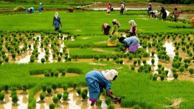 کارآفرینان جدید هند تکنسین نیستند؛ کشاورز هستند!
