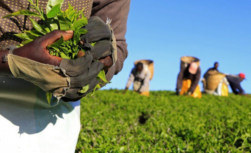 داستان کارآفرینی کشاورزی