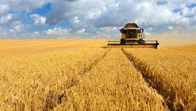 Photo of آشنایی با ویژه نامه کشاورزی اکوموتیو ؛بخش ها ، استارتاپ ها ، چالش ها