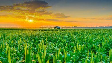 Photo of نیازهای فناورانه کشاورزی در رویداد فناورانه آنلاین معرفی می شود