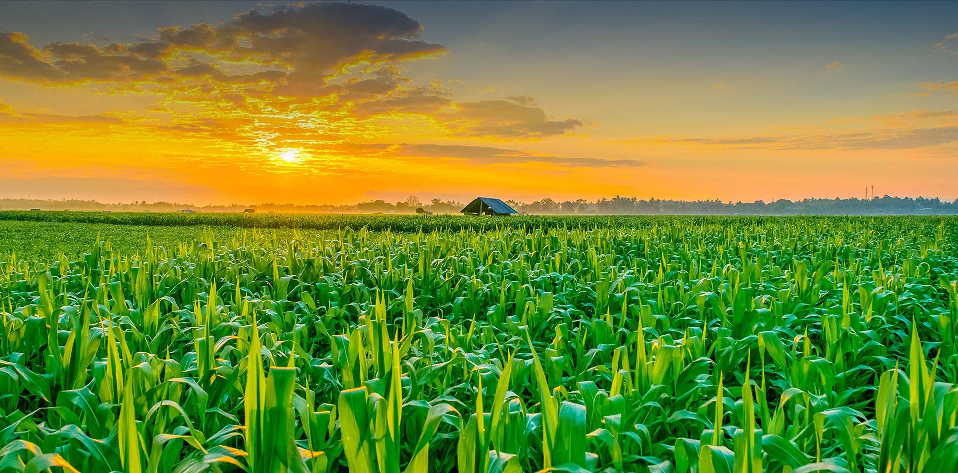 نیازهای فناورانه کشاورزی در رویداد فناورانه آنلاین معرفی می شود