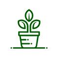 معرفي استارتاپ  گلخونه حنا، فروشگاه و خدمات نگهداری از گیاهان آپارتمانی