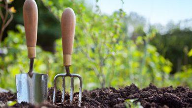 حمایت از ایده های برتر حوزههای فنی و مهندسی و کشاورزی