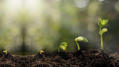 سرمایه بذری؛ خدمت جدید صندوق نوآوری برای شتابدهنده ها