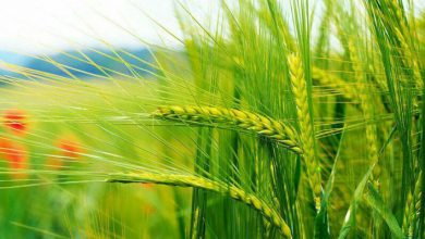 رویداد کشاورزی و امنیت غذایی برگزار می شود