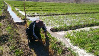 ضرورت دانش بنیان شدن حوزه کشاورزی